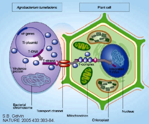 simple animal cell with labels. Simple Animal Cell Diagram For